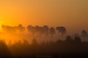 Kuldne hommik