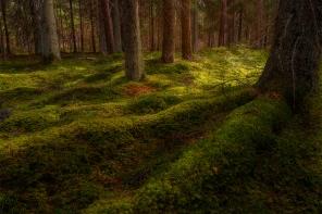 Flowing woodland