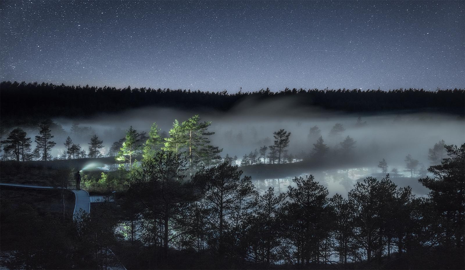 foggy bog